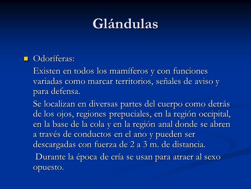 Glándulas Odoríferas: Odoríferas: Existen en todos los mamíferos y con funciones variadas como marcar territorios, señales de aviso y para defensa. Ex
