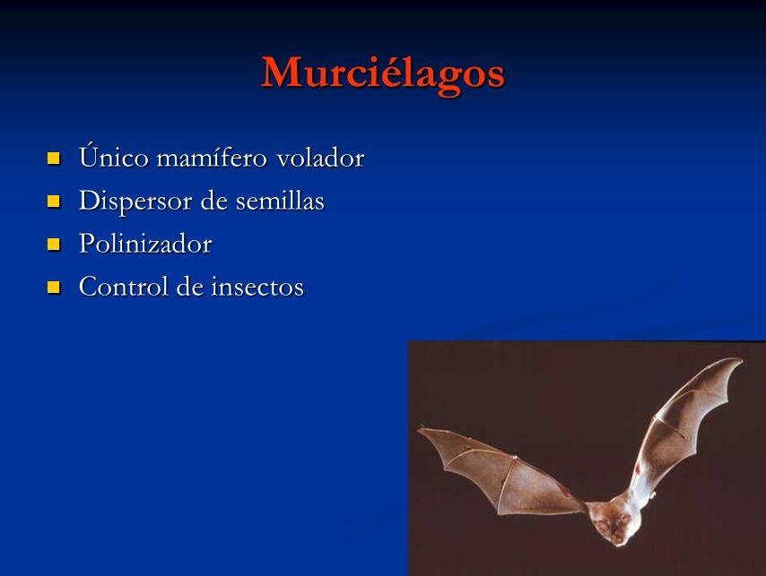 Murciélagos Único mamífero volador Único mamífero volador Dispersor de semillas Dispersor de semillas Polinizador Polinizador Control de insectos Cont