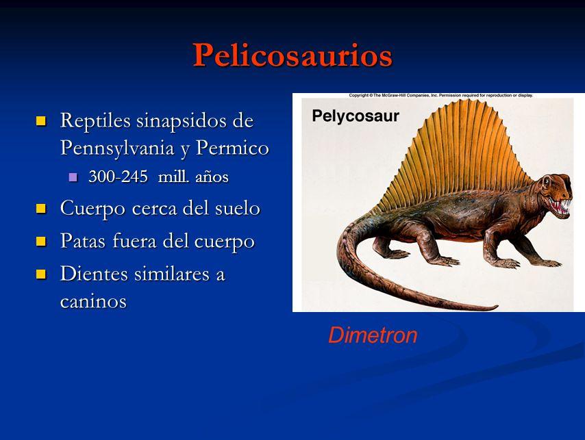 Terapsidos Cuerpo se levanta del suelo Cuerpo se levanta del suelo Miembros bajo el cuerpo Miembros bajo el cuerpo Dientes diferenciados en 3 tipos Dientes diferenciados en 3 tipos Paladar secundario desarrollados Paladar secundario desarrollados Formula dentaria 2-3-3-3- 3 Formula dentaria 2-3-3-3- 3 Lystosaurus