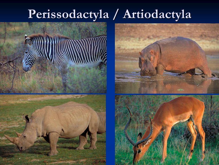 Perissodactyla / Artiodactyla