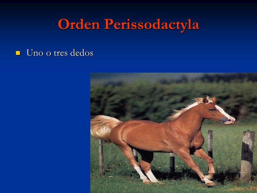 Orden Perissodactyla Uno o tres dedos Uno o tres dedos