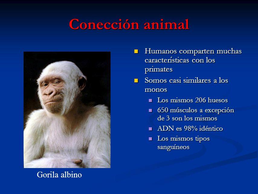 Conección animal Humanos comparten muchas características con los primates Somos casi similares a los monos Los mismos 206 huesos 650 músculos a excep