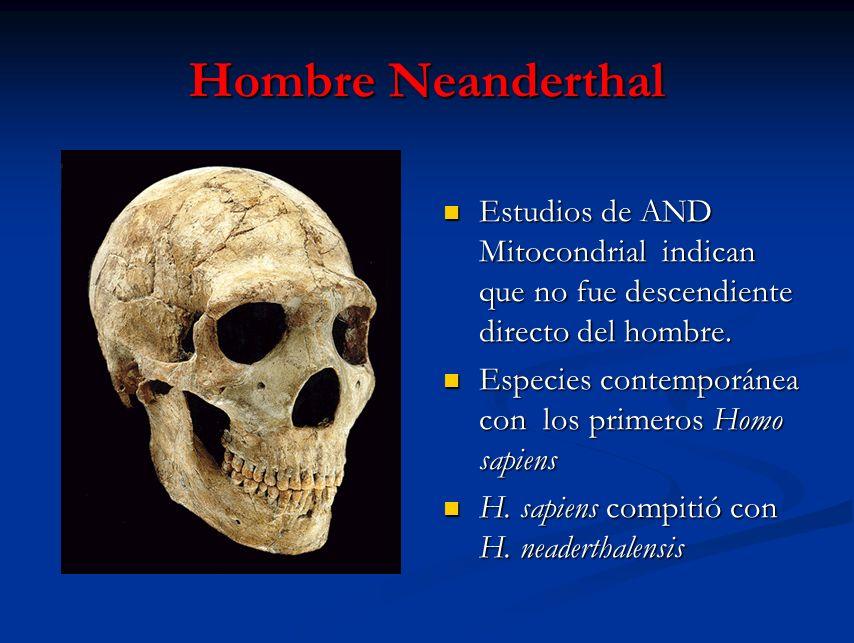 Hombre Neanderthal Estudios de AND Mitocondrial indican que no fue descendiente directo del hombre. Especies contemporánea con los primeros Homo sapie