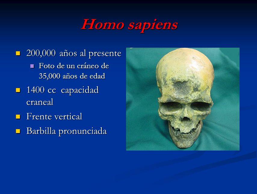 Homo sapiens 200,000 años al presente 200,000 años al presente Foto de un cráneo de 35,000 años de edad Foto de un cráneo de 35,000 años de edad 1400