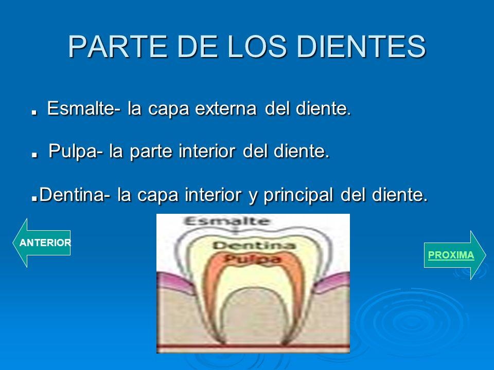 LOS DIENTES PERMANENTES El nino empezara a perder sus dientes temporeros desde los 6 anos de edad. Los dientes temporeros seran remplazados por sus di