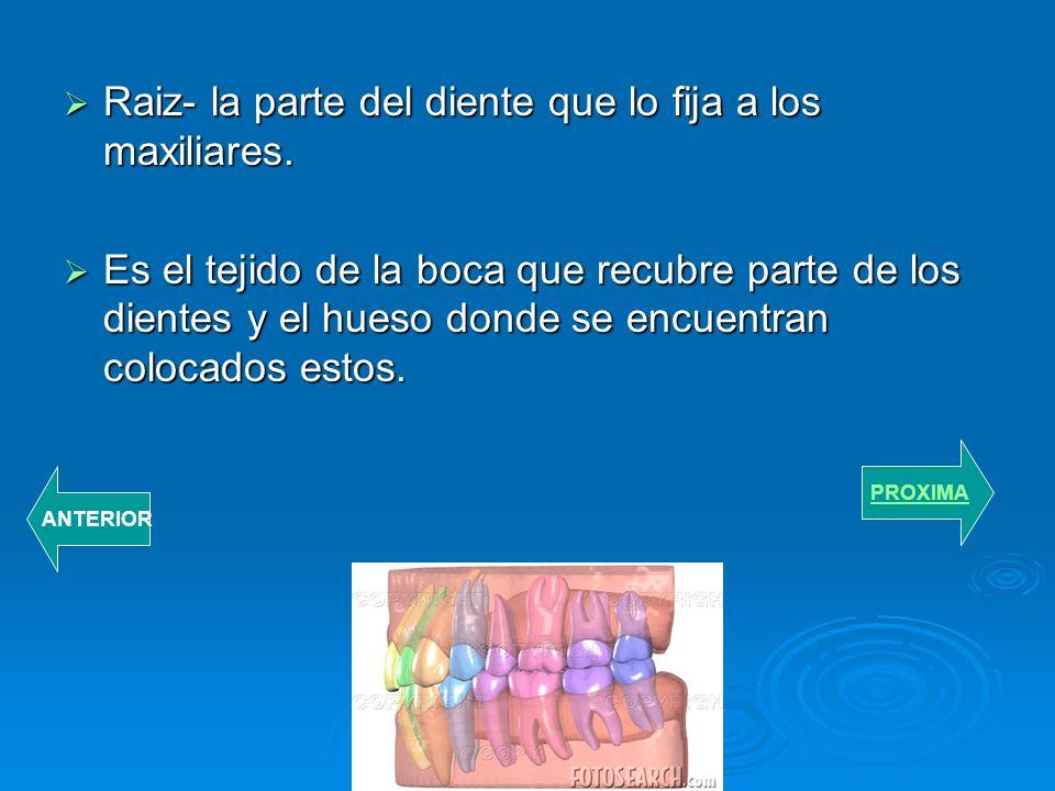 PARTE DE LOS DIENTES. Esmalte- la capa externa del diente.. Pulpa- la parte interior del diente.. Dentina- la capa interior y principal del diente. PR