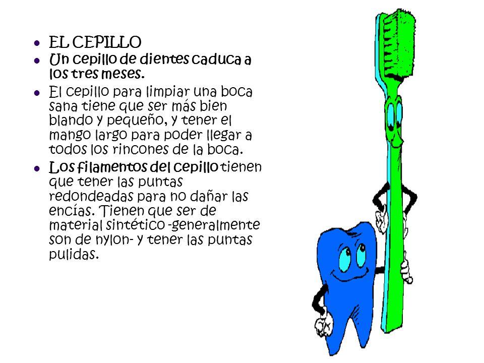 EL CEPILLO Un cepillo de dientes caduca a los tres meses. El cepillo para limpiar una boca sana tiene que ser más bien blando y pequeño, y tener el ma