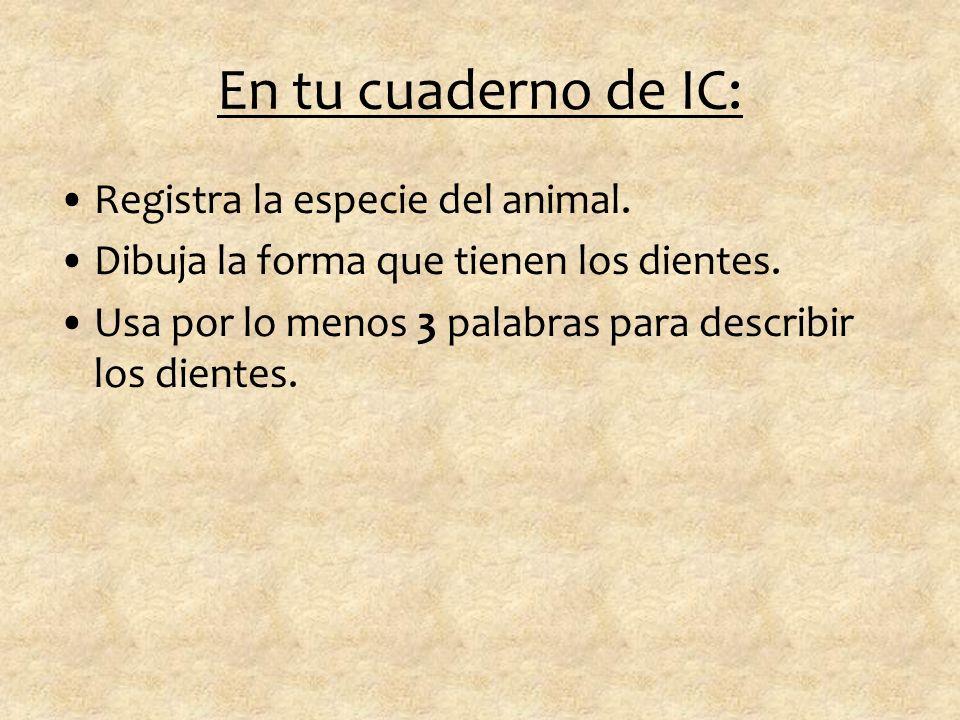 Quinto Animal…