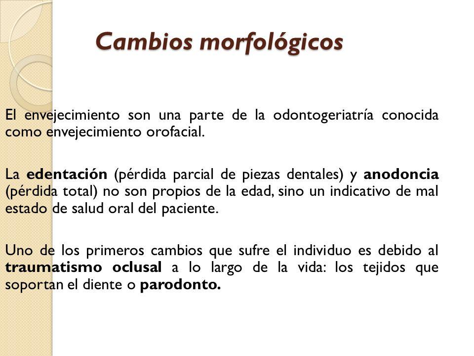 Cambios morfológicos El envejecimiento son una parte de la odontogeriatría conocida como envejecimiento orofacial. La edentación (pérdida parcial de p