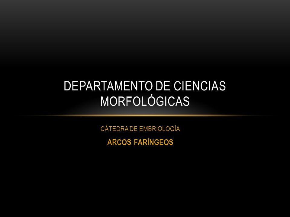 DEPARTAMENTO DE CIENCIAS MORFOLÓGICAS CÁTEDRA DE EMBRIOLOGÍA ARCOS FARÍNGEOS
