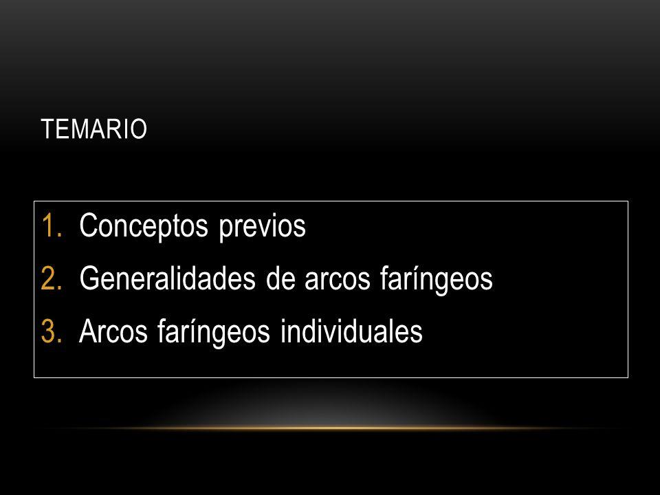 TEMARIO 1.Conceptos previos 2.Generalidades de arcos faríngeos 3.Arcos faríngeos individuales