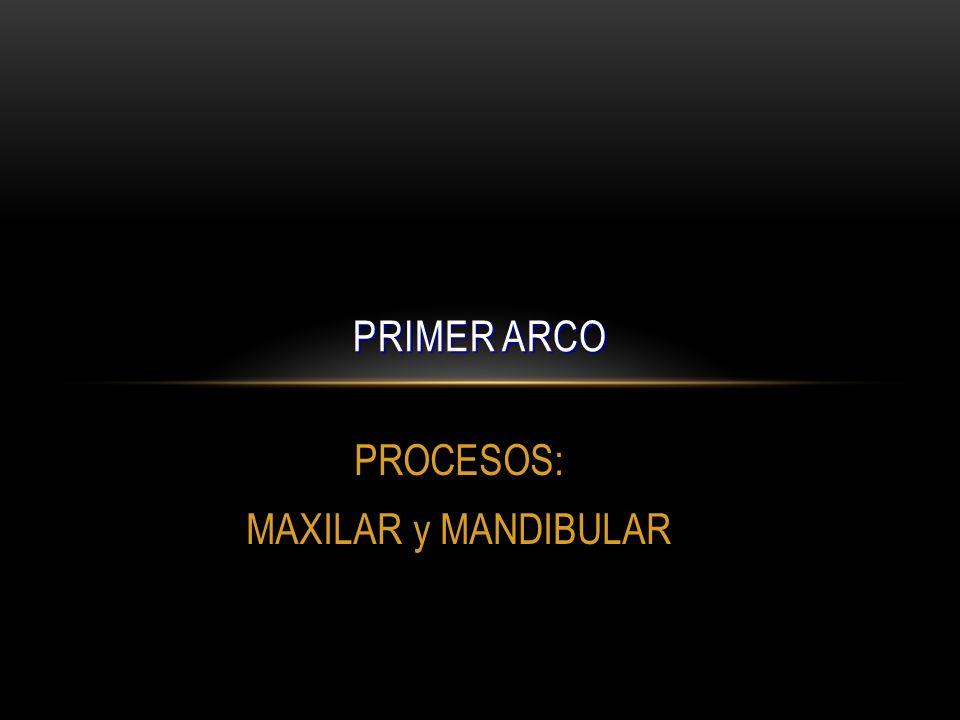 PROCESOS: MAXILAR y MANDIBULAR PRIMER ARCO