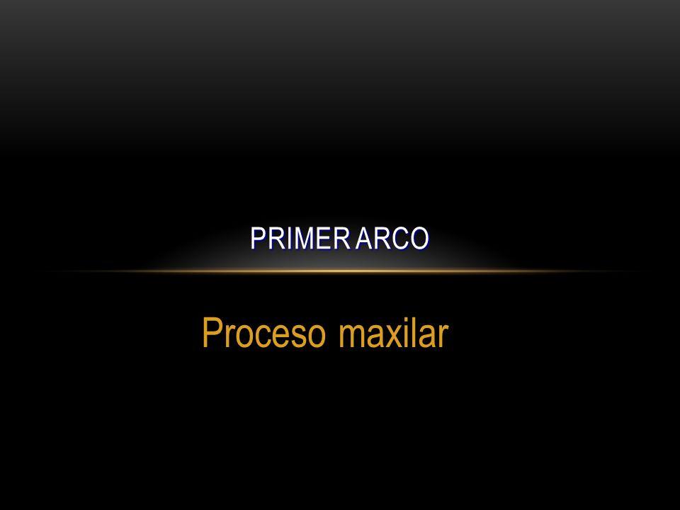 Proceso maxilar PRIMER ARCO