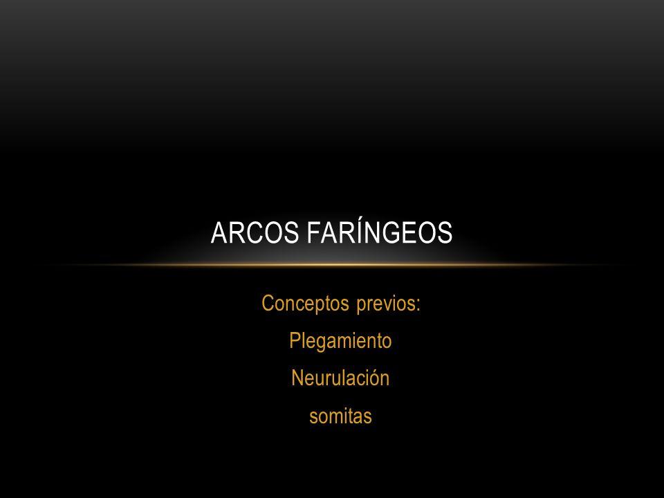 Conceptos previos: Plegamiento Neurulación somitas ARCOS FARÍNGEOS