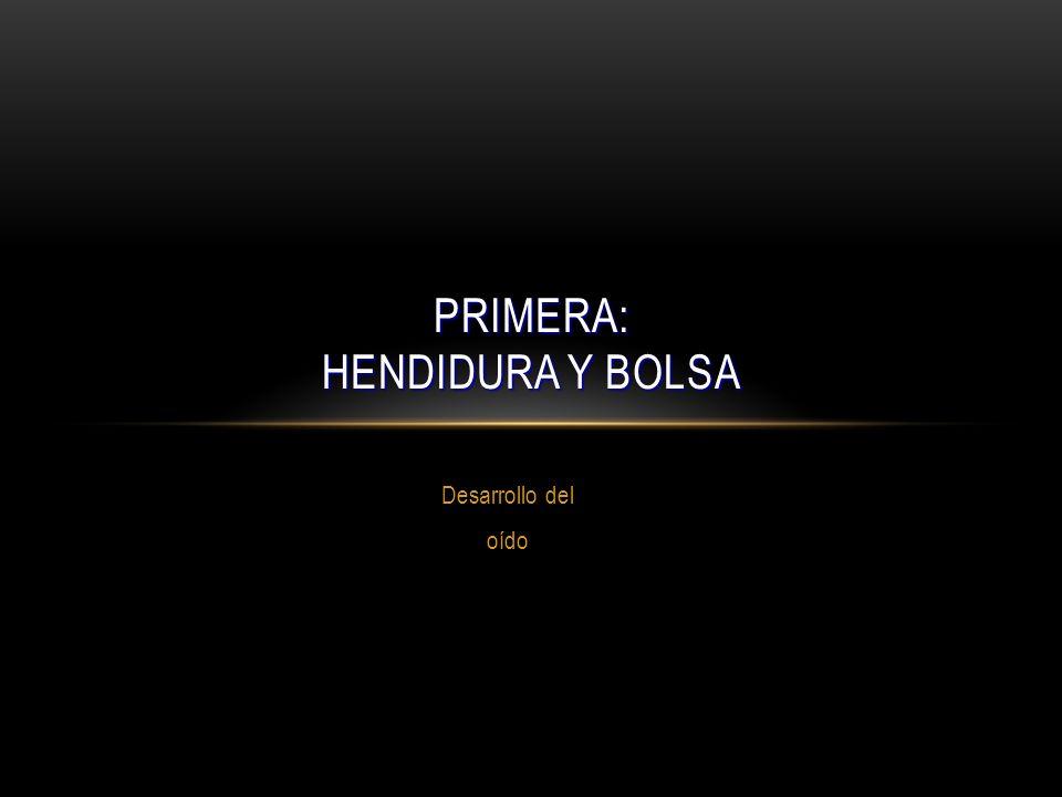 Desarrollo del oído PRIMERA: HENDIDURA Y BOLSA