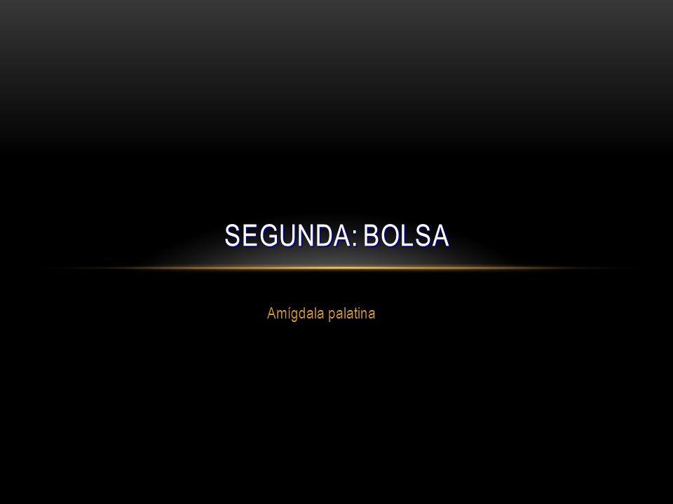 Amígdala palatina SEGUNDA: BOLSA