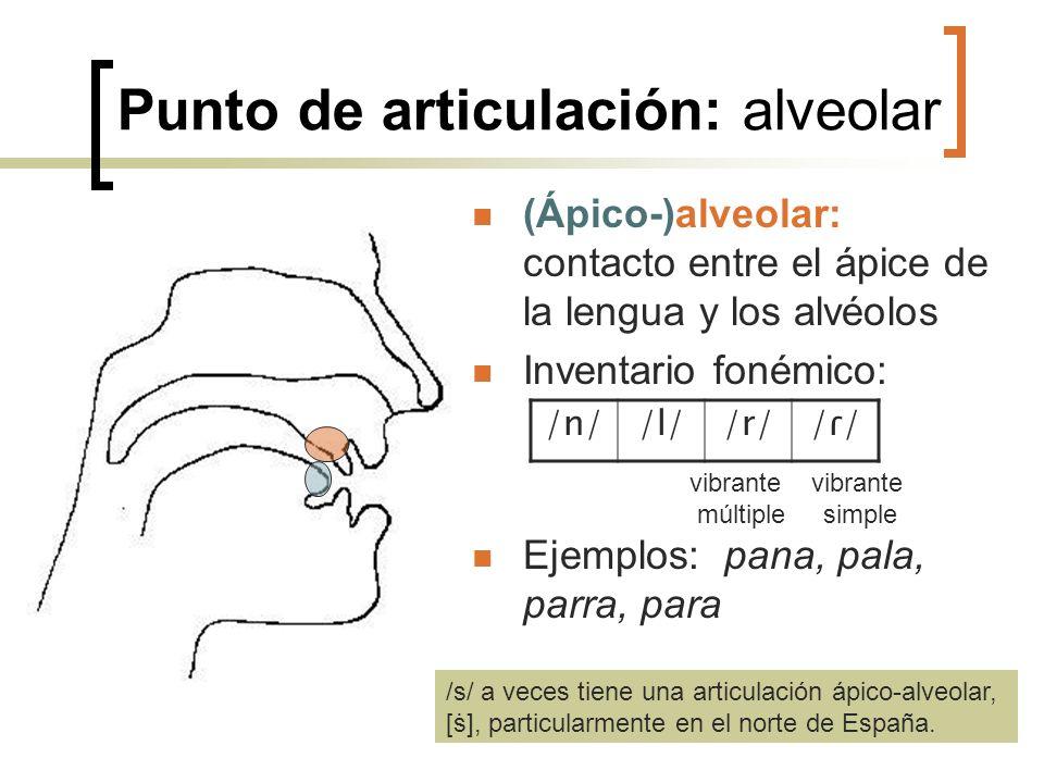 Punto de articulación: alveolar (Ápico-)alveolar: contacto entre el ápice de la lengua y los alvéolos Inventario fonémico: Ejemplos: pana, pala, parra