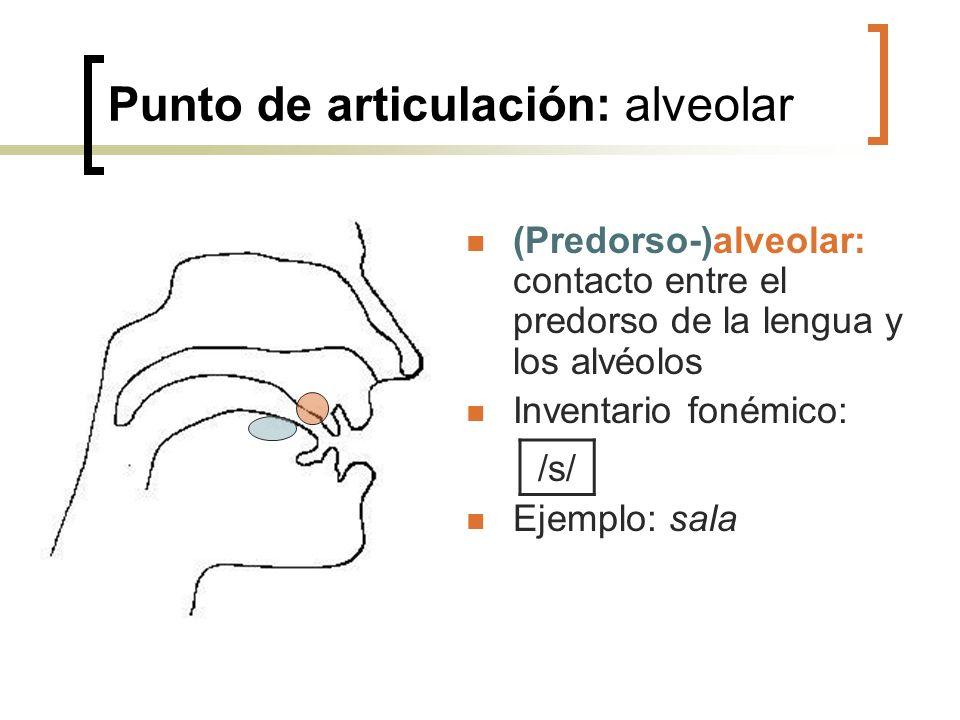 Punto de articulación: alveolar (Predorso-)alveolar: contacto entre el predorso de la lengua y los alvéolos Inventario fonémico: Ejemplo: sala /s/