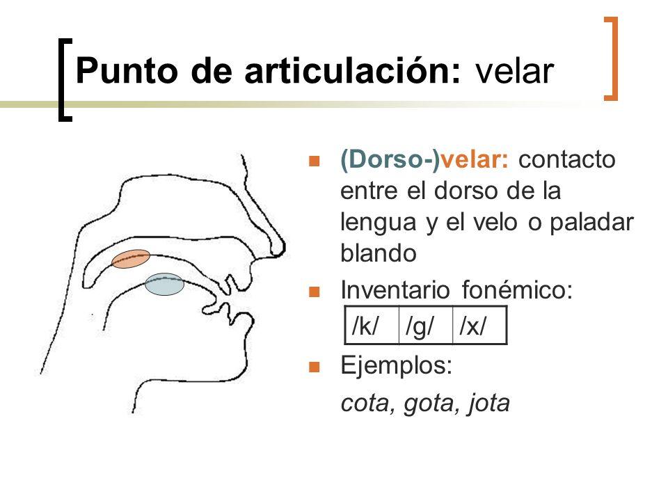 Punto de articulación: velar (Dorso-)velar: contacto entre el dorso de la lengua y el velo o paladar blando Inventario fonémico: Ejemplos: cota, gota,