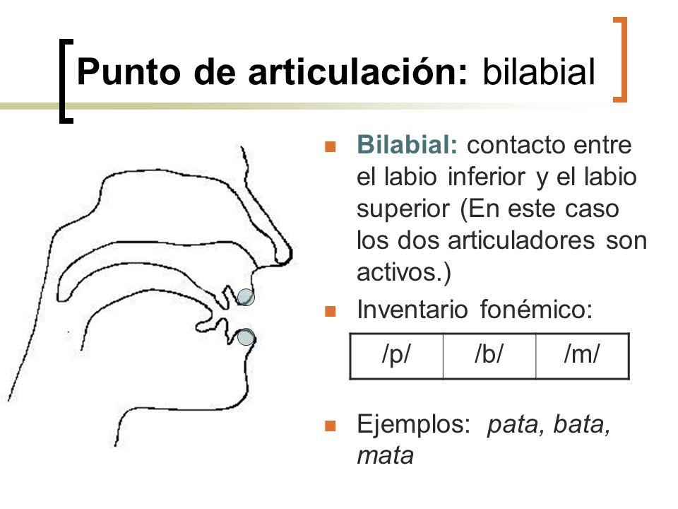 Punto de articulación: bilabial Bilabial: contacto entre el labio inferior y el labio superior (En este caso los dos articuladores son activos.) Inven