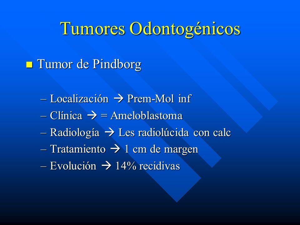 Tumores Odontogénicos Tumor de Pindborg Tumor de Pindborg –Localización Prem-Mol inf –Clínica = Ameloblastoma –Radiología Les radiolúcida con calc –Tr