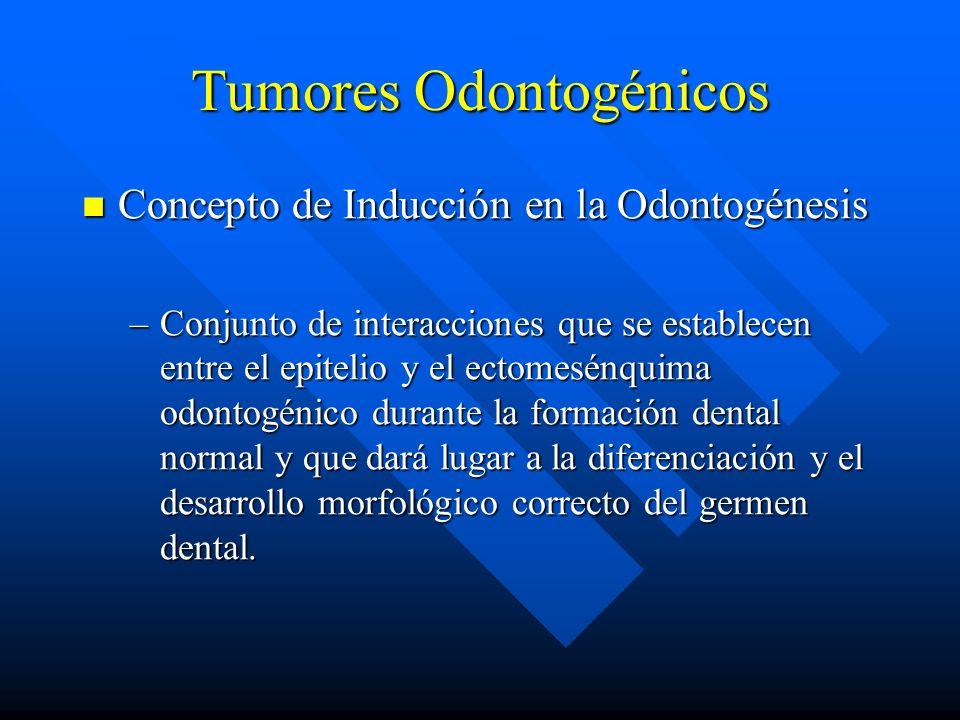 Tumores Odontogénicos Concepto de Inducción en la Odontogénesis Concepto de Inducción en la Odontogénesis –Conjunto de interacciones que se establecen