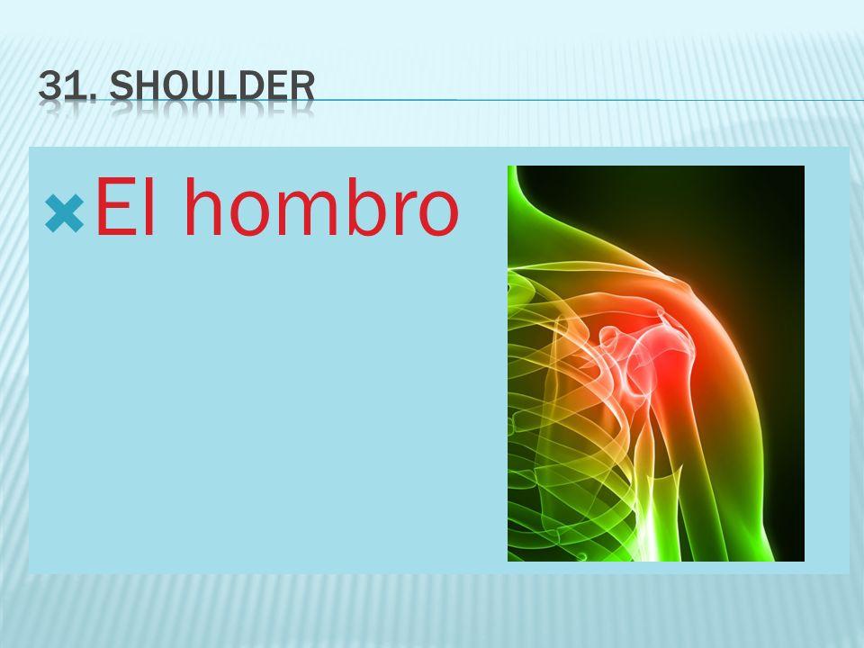 El hombro