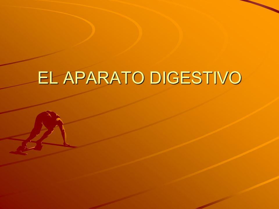 La función del aparato digestivo es realizar la digestión Es el proceso mediante el cual las moléculas que forman parte de los alimentos son disgregadas, convertidas en moléculas más pequeñas.