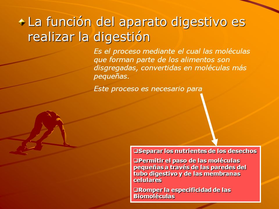 La función del aparato digestivo es realizar la digestión Es el proceso mediante el cual las moléculas que forman parte de los alimentos son disgregad