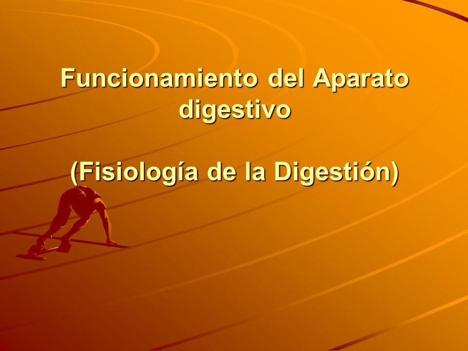 Funcionamiento del Aparato digestivo (Fisiología de la Digestión)