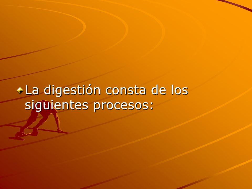 La digestión consta de los siguientes procesos: