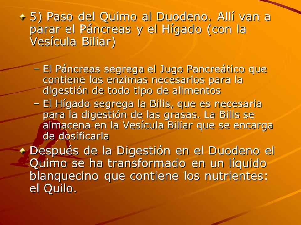 5) Paso del Quimo al Duodeno. Allí van a parar el Páncreas y el Hígado (con la Vesícula Biliar) –El Páncreas segrega el Jugo Pancreático que contiene