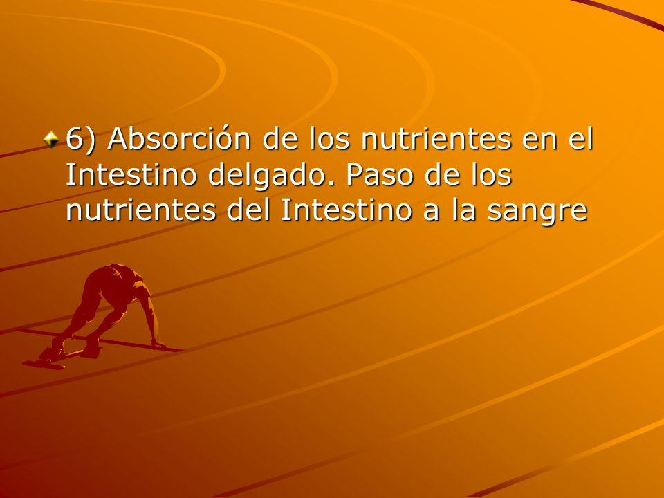 6) Absorción de los nutrientes en el Intestino delgado. Paso de los nutrientes del Intestino a la sangre
