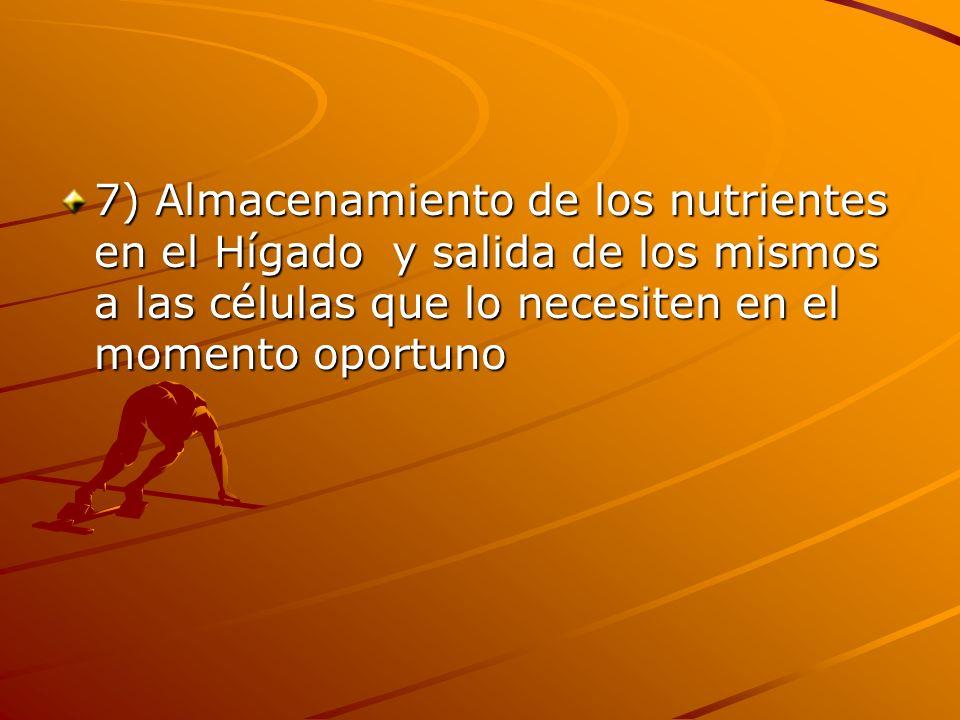 7) Almacenamiento de los nutrientes en el Hígado y salida de los mismos a las células que lo necesiten en el momento oportuno