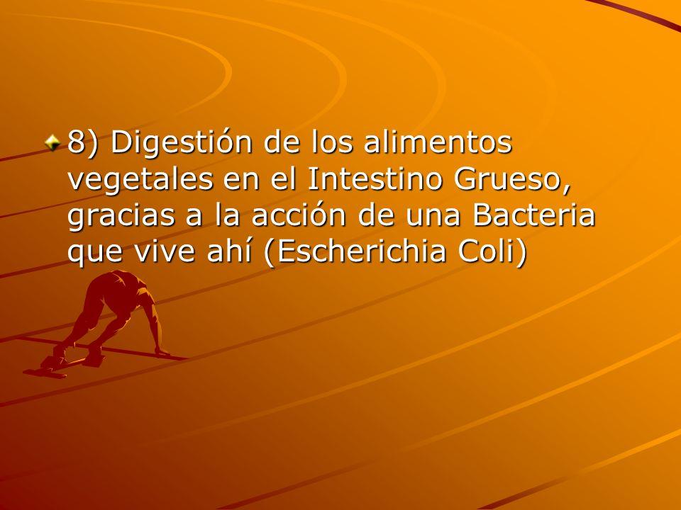 8) Digestión de los alimentos vegetales en el Intestino Grueso, gracias a la acción de una Bacteria que vive ahí (Escherichia Coli)