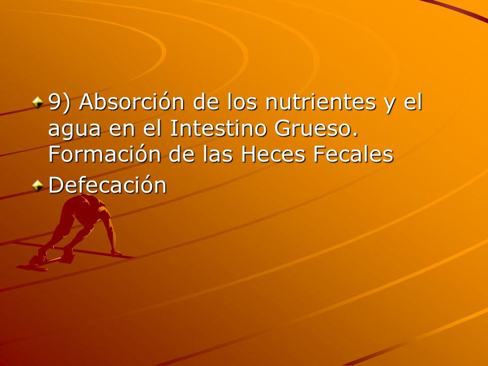 9) Absorción de los nutrientes y el agua en el Intestino Grueso. Formación de las Heces Fecales Defecación