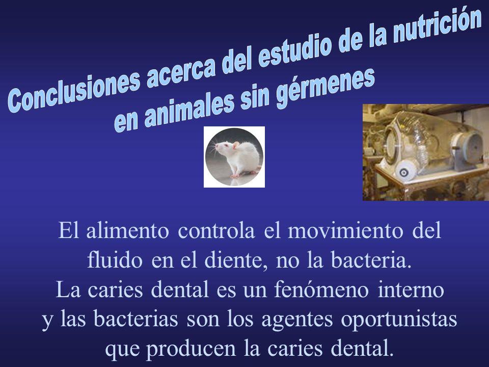 El alimento controla el movimiento del fluido en el diente, no la bacteria. La caries dental es un fenómeno interno y las bacterias son los agentes op
