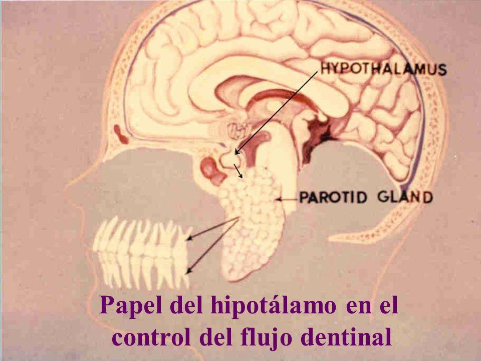 Papel del hipotálamo en el control del flujo dentinal