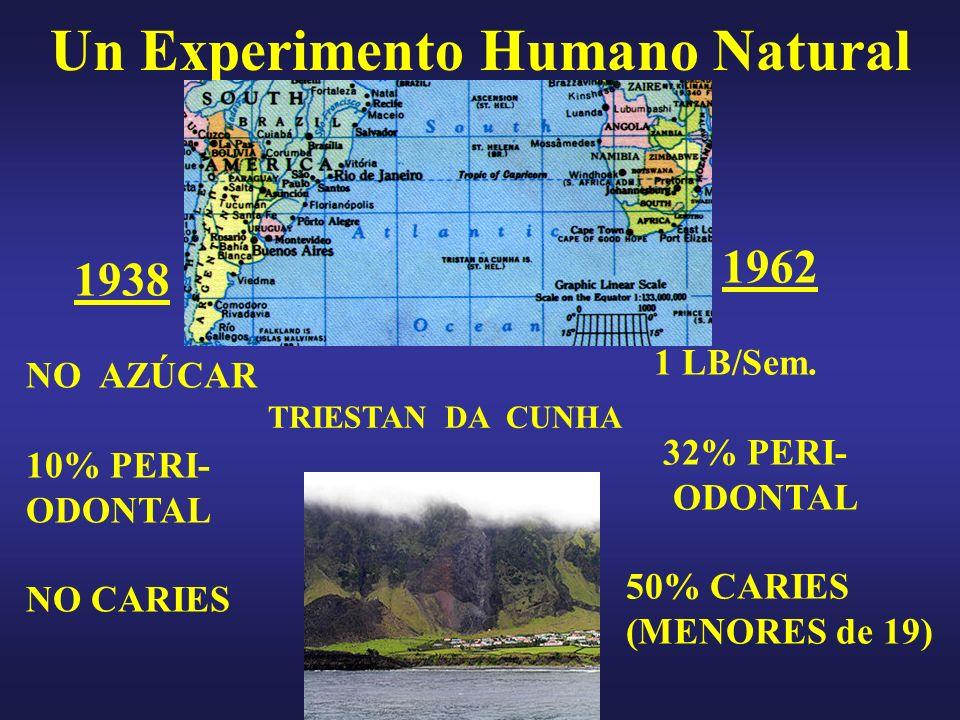 TRIESTAN DA CUNHA 1938 NO AZÚCAR 10% PERI- ODONTAL NO CARIES 1962 1 LB/Sem. 32% PERI- ODONTAL 50% CARIES (MENORES de 19) Un Experimento Humano Natural
