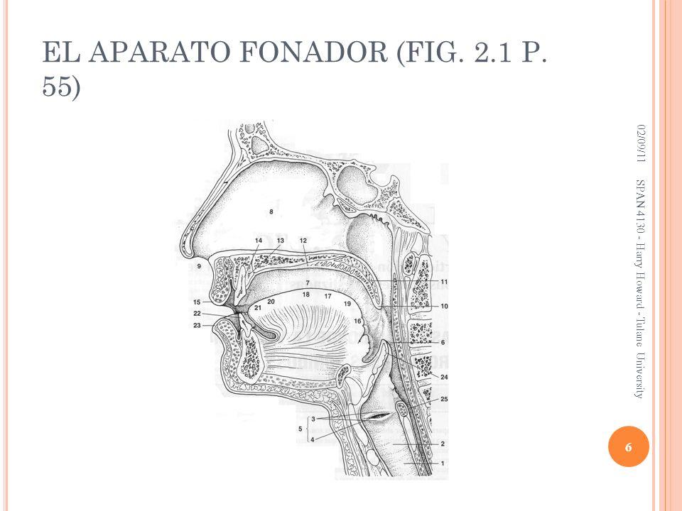 EL APARATO FONADOR (FIG. 2.1 P. 55) 02/09/11 6 SPAN 4130 - Harry Howard - Tulane University