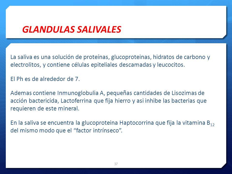 La saliva es una solución de proteínas, glucoproteinas, hidratos de carbono y electrolitos, y contiene células epiteliales descamadas y leucocitos. El