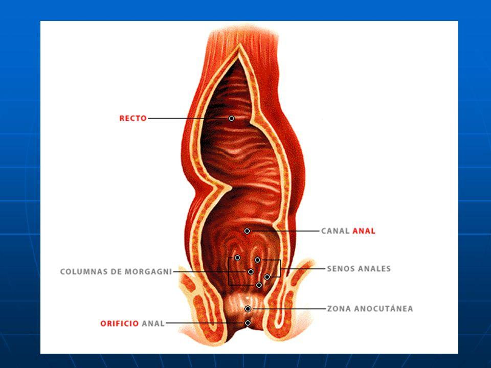 DEFECACIÓN La mayor parte del agua y las sales minerales son absorbidas en el intestino grueso. Los restos de los alimentos que no se han digerido for