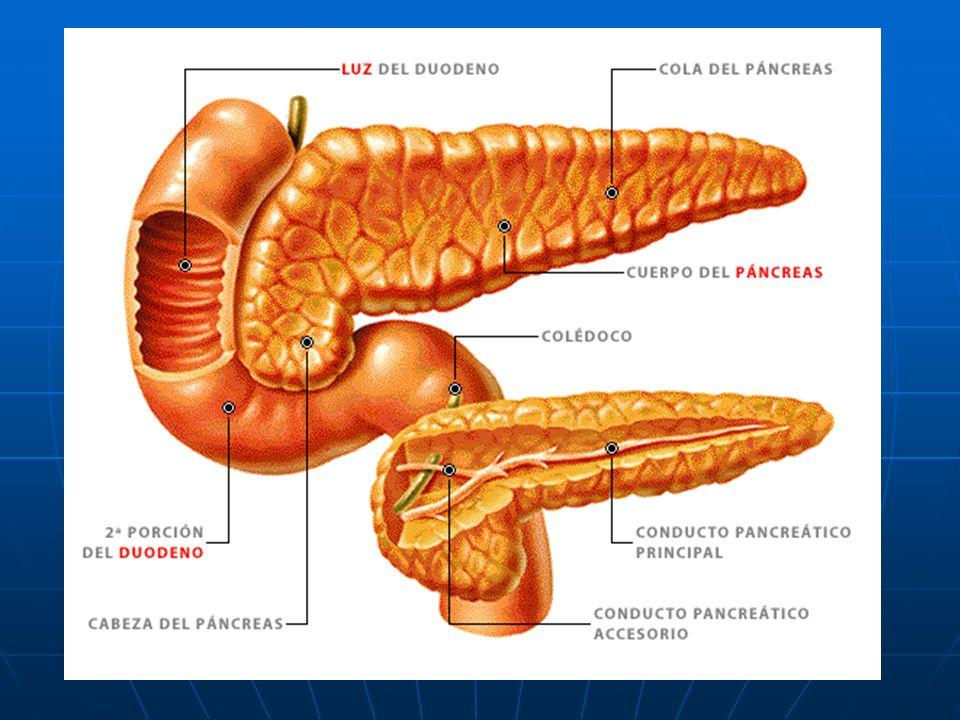 EL PANCREAS El páncreas es una glándula que segrega hormonas y jugo pancreático