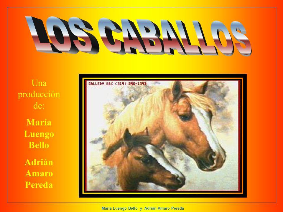 María Luengo Bello y Adrián Amaro Pereda Una producción de: María Luengo Bello Adrián Amaro Pereda
