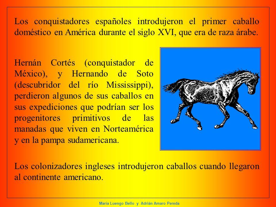 María Luengo Bello y Adrián Amaro Pereda Los conquistadores españoles introdujeron el primer caballo doméstico en América durante el siglo XVI, que er