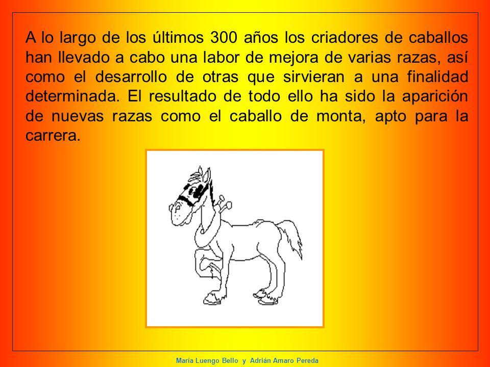 María Luengo Bello y Adrián Amaro Pereda A lo largo de los últimos 300 años los criadores de caballos han llevado a cabo una labor de mejora de varias