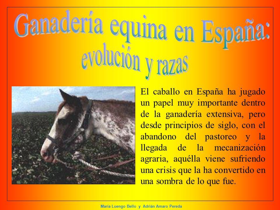 María Luengo Bello y Adrián Amaro Pereda El caballo en España ha jugado un papel muy importante dentro de la ganadería extensiva, pero desde principio