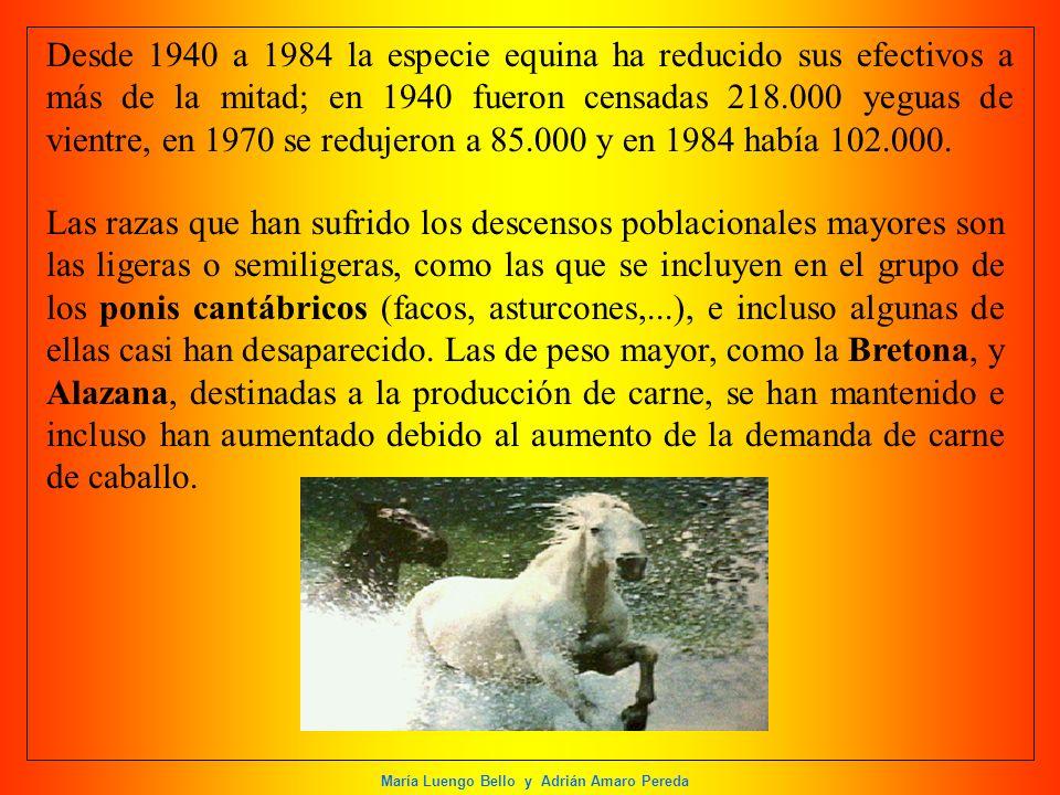 María Luengo Bello y Adrián Amaro Pereda Desde 1940 a 1984 la especie equina ha reducido sus efectivos a más de la mitad; en 1940 fueron censadas 218.