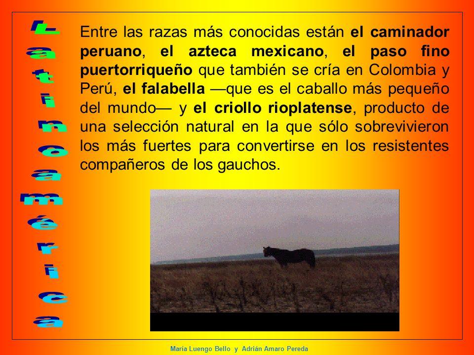 María Luengo Bello y Adrián Amaro Pereda Entre las razas más conocidas están el caminador peruano, el azteca mexicano, el paso fino puertorriqueño que