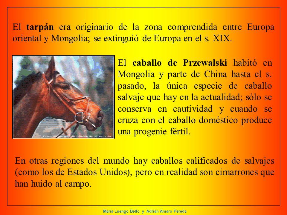 María Luengo Bello y Adrián Amaro Pereda El tarpán era originario de la zona comprendida entre Europa oriental y Mongolia; se extinguió de Europa en e